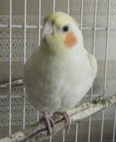 Birdie, Kansas City, KS